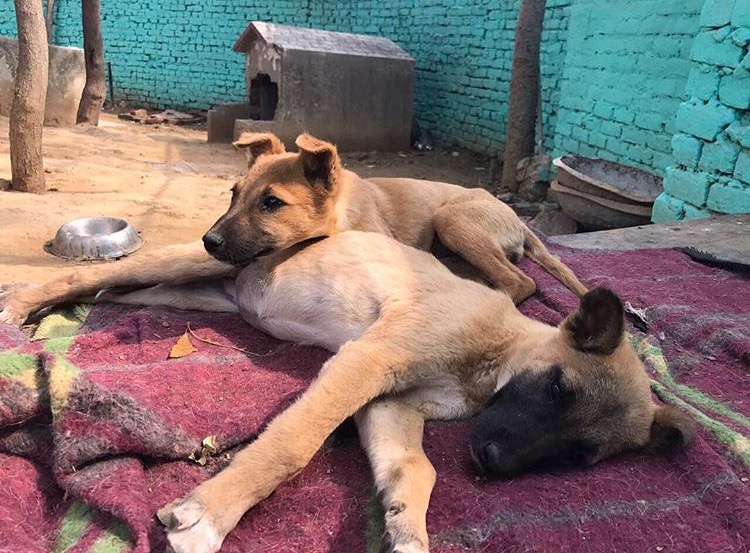 Sai Ashram Doggies 1