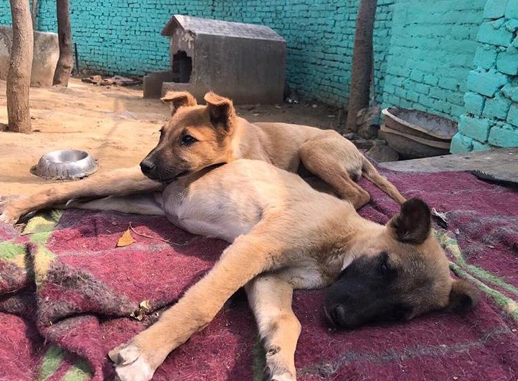 Sai Ashram Doggies 1